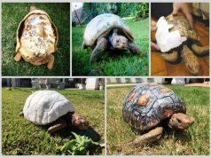 3d printed tortoise shell
