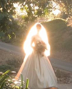 illuminated bride
