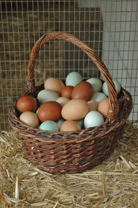 eggs ina basket 25