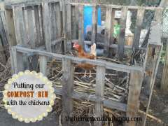 Putting Compost Bin With Chickens
