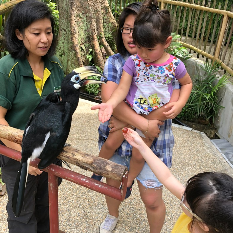 Bird's eye tour review Jurong Bird Park Singapore