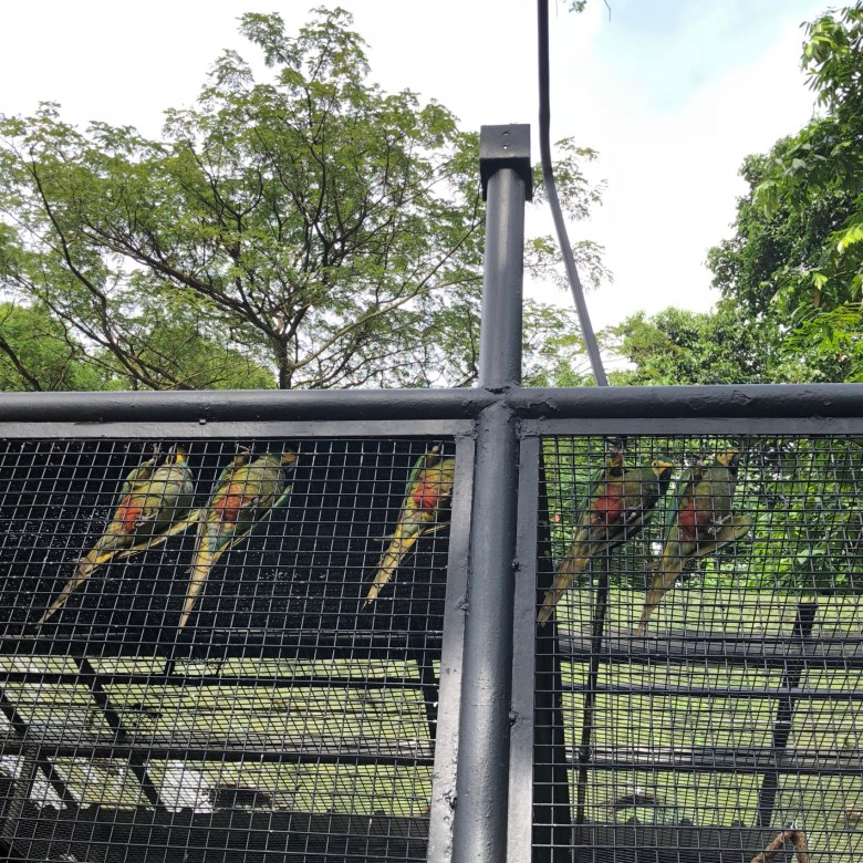 outdoor activities in Singapore bird park