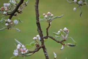 jason lycette photo blooms