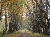 Avenue from Cat Gates, Culzean