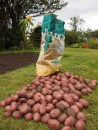 Recycle - feed sacks!
