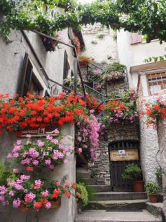 over flowing with flowers - Limone