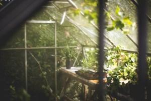 greenhouse, plants, pots