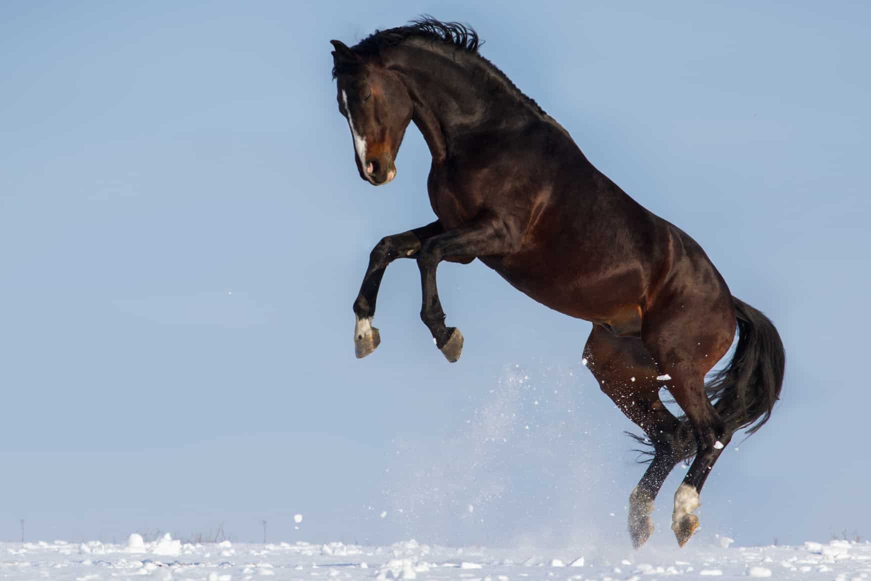 Why Are Horses Frisky When It S Cold The Horse