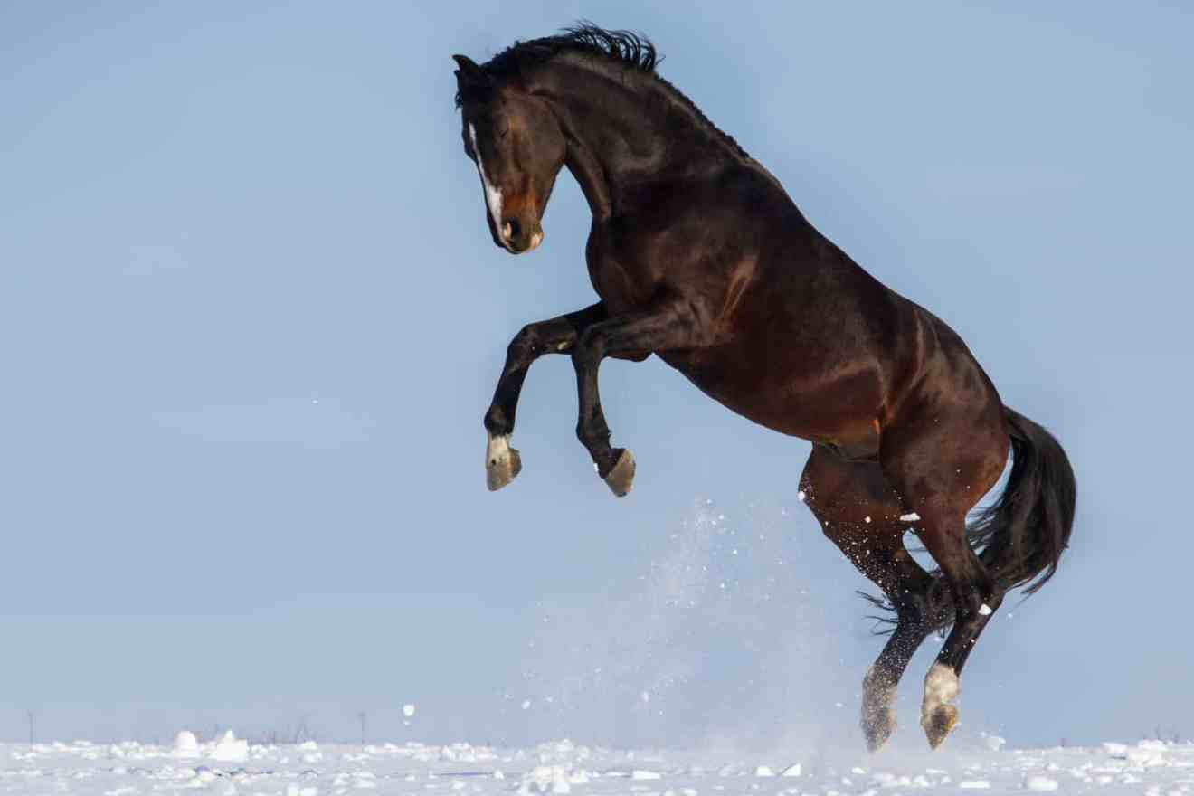 Why Are Horses Frisky When It's Cold? – The Horse