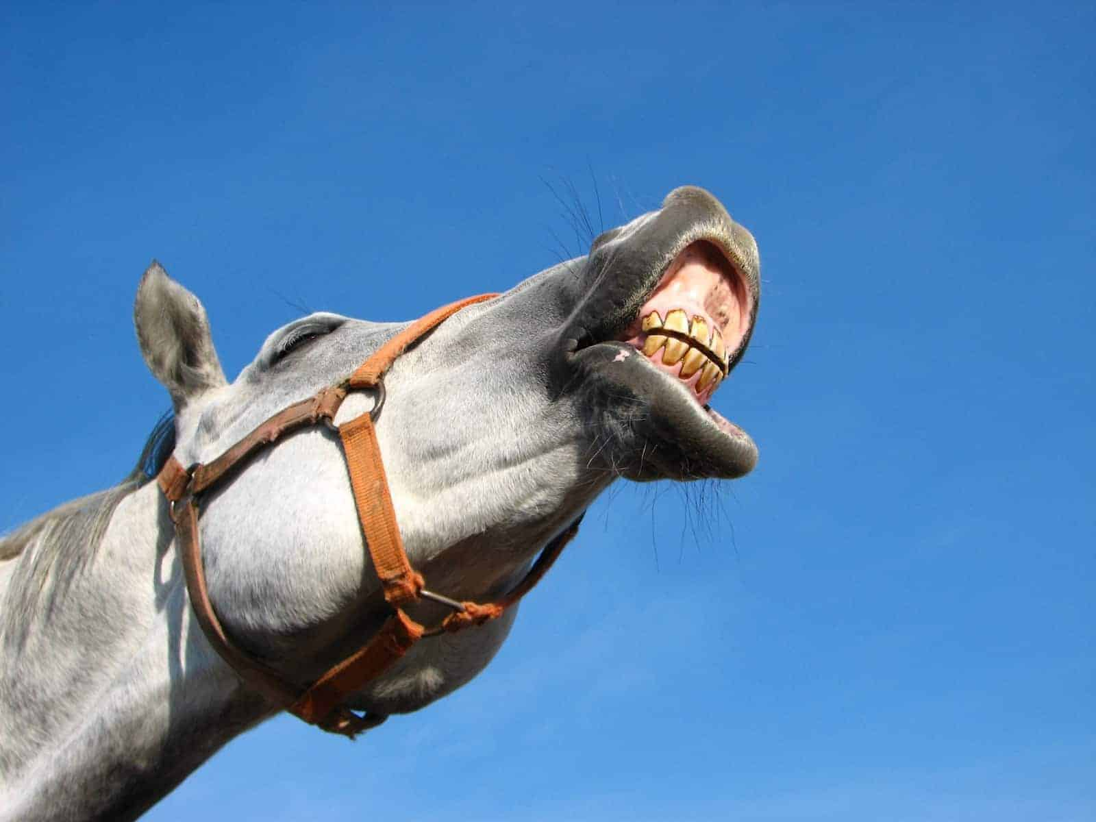 20 Things Your Horse S Teeth Are Telling You The Horse
