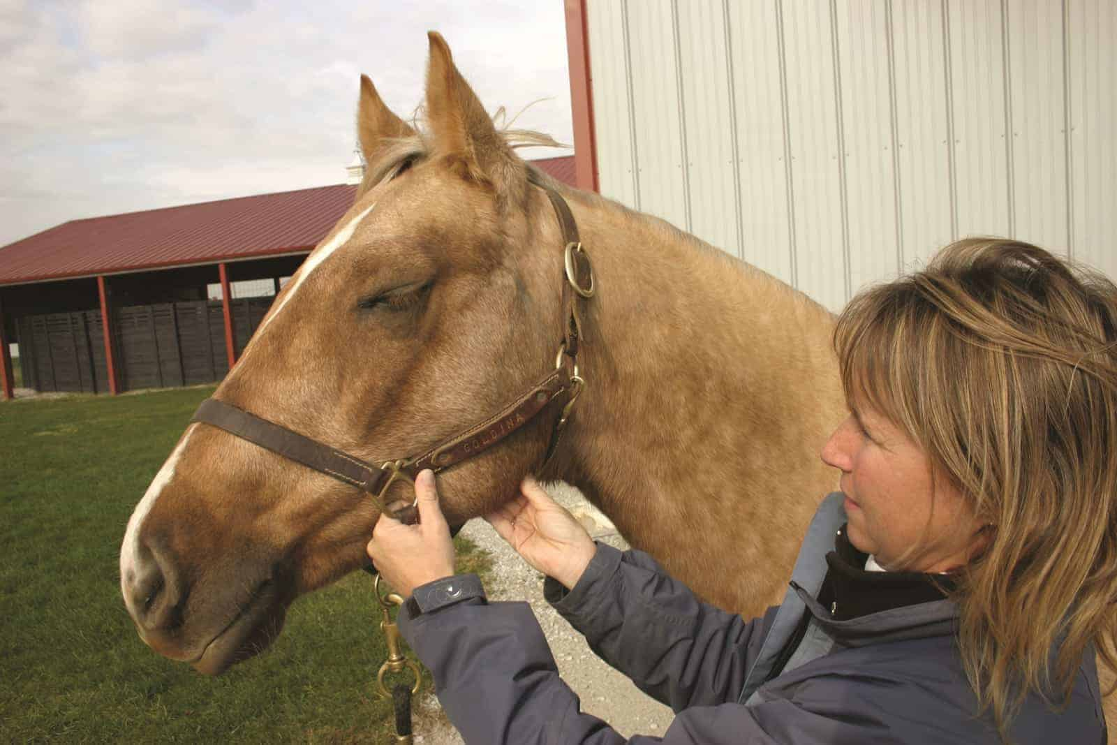 Normal Horse Temperature Heart Rate Breathing Rate The