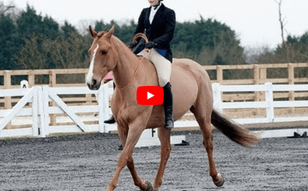 Tackless Dressage Incredible Riding And A Great Cause
