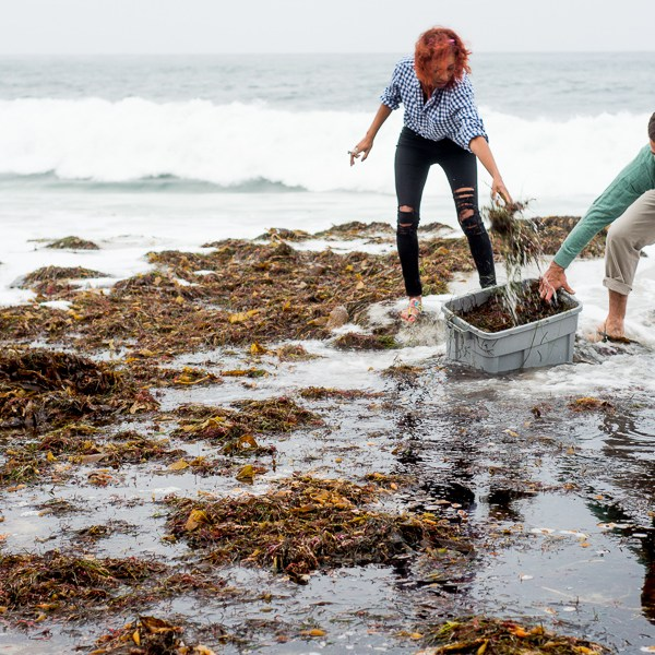 A Little Kelp From My Friends: How to Make Seaweed Liquid Fertilizer