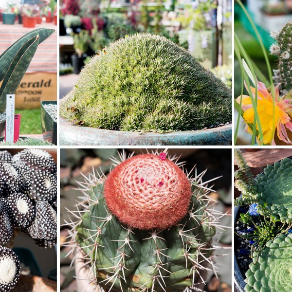 Who, What, Rare: Where to Find Hard-to-Find Succulents