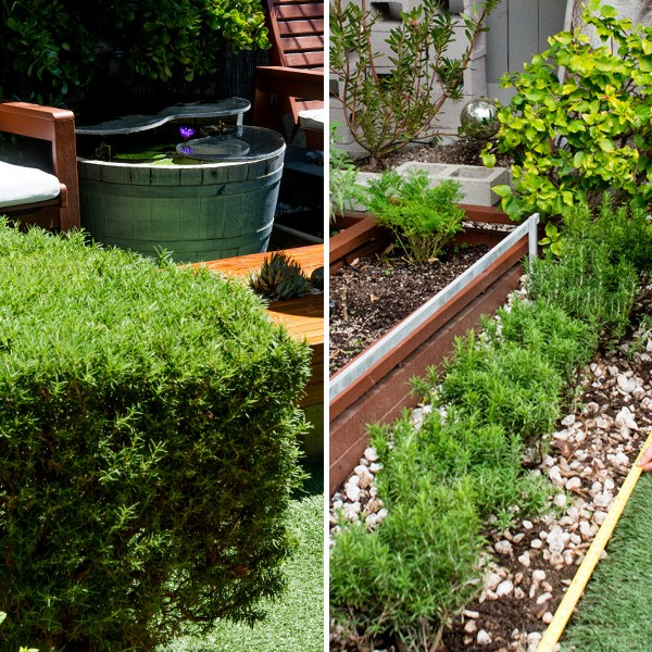 Hedge Space: Rosemary Goes Out, Rosemary Comes In
