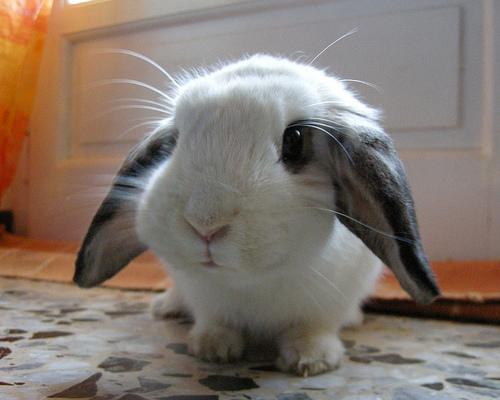 cute_bunny