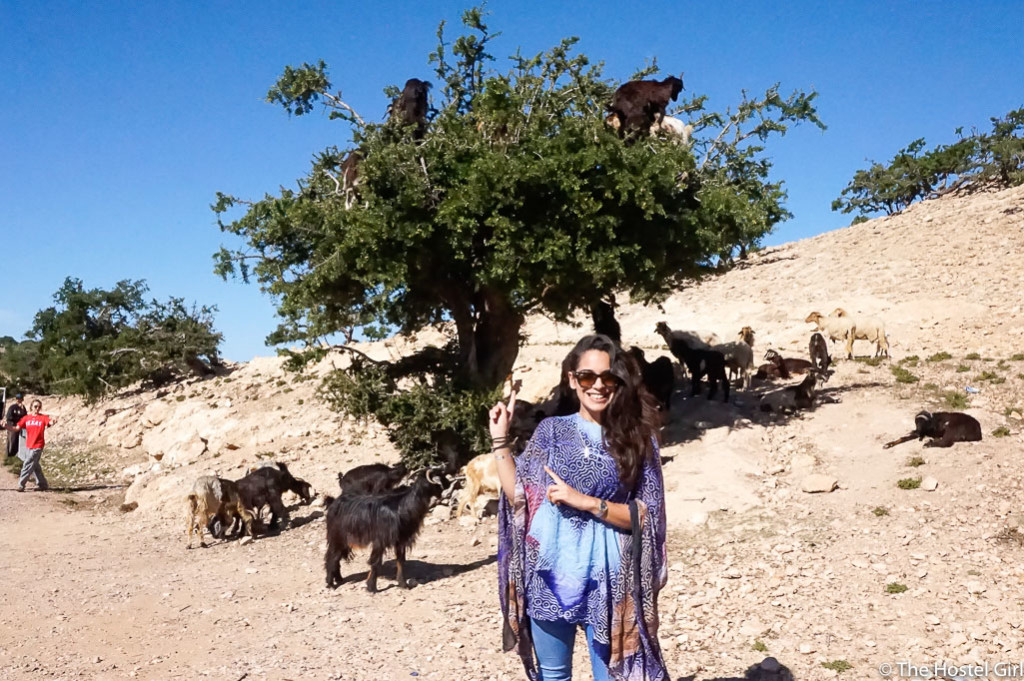 Secrets of Morocco Goats in Trees The Hostel Girl -1