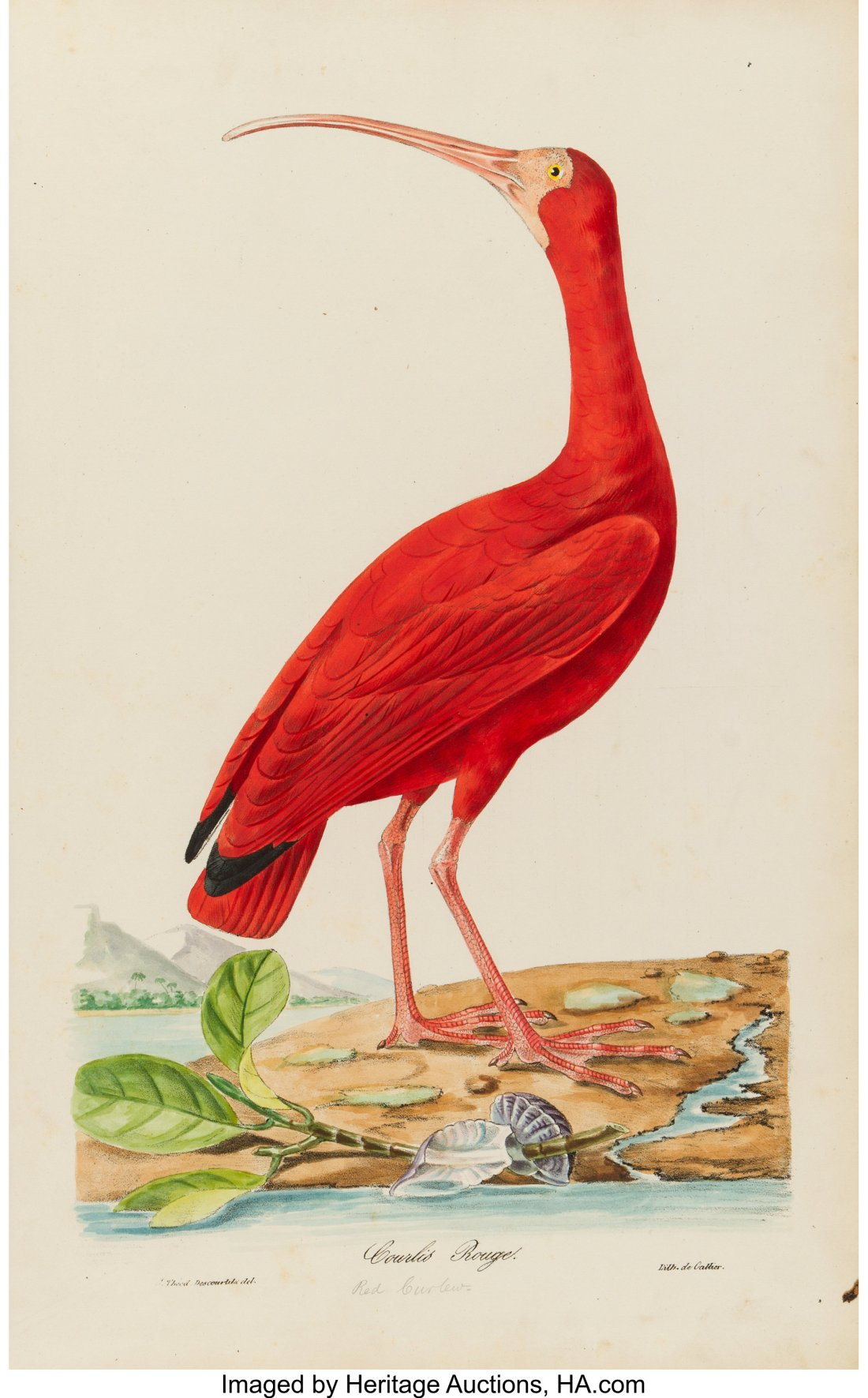 A Rare Bird! Heritage Auctions Could Sell a Gorgeous and