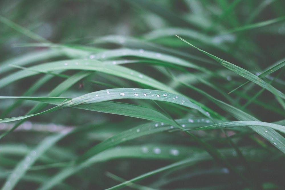ticks, grass
