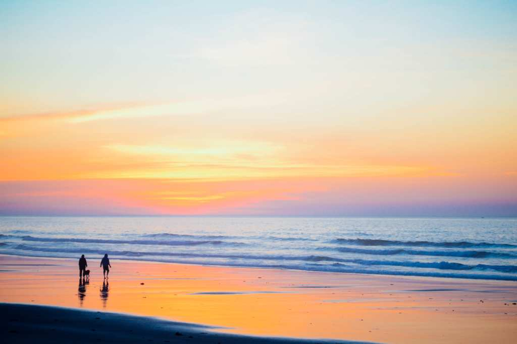 Quality of life, beach, dog, sunset