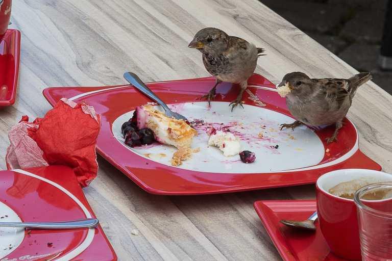 Food waste, birds