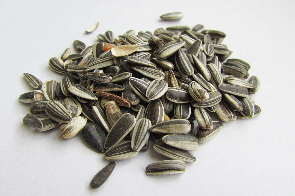 Seeds, sunflower