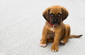 Potty training your puppy the easy way - The Hot Mess Press