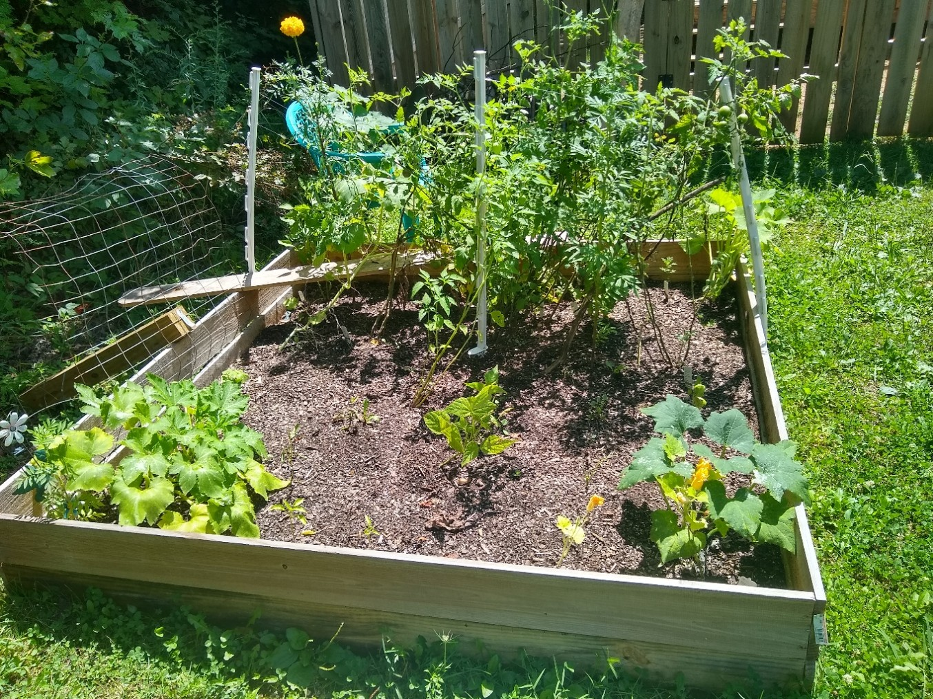 Vegetable garden successes and failures: Learning during lockdown-The Hot Mess Press