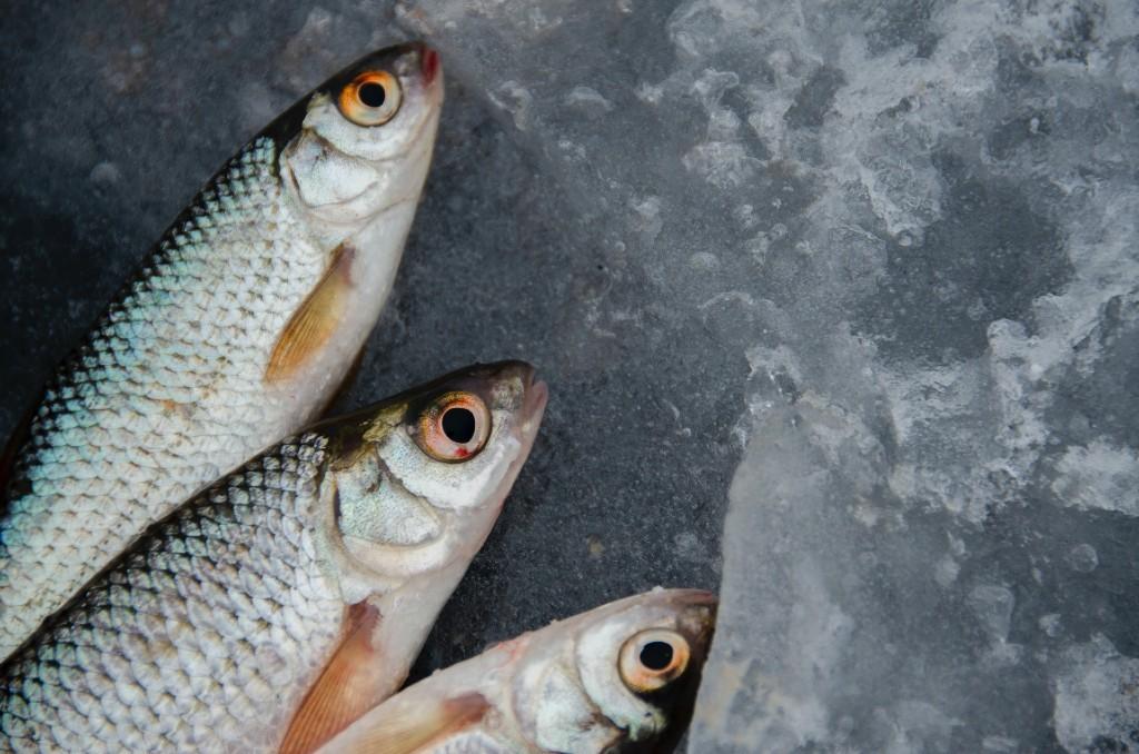 freezer, fish