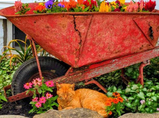 Wheel barrow, flower bed
