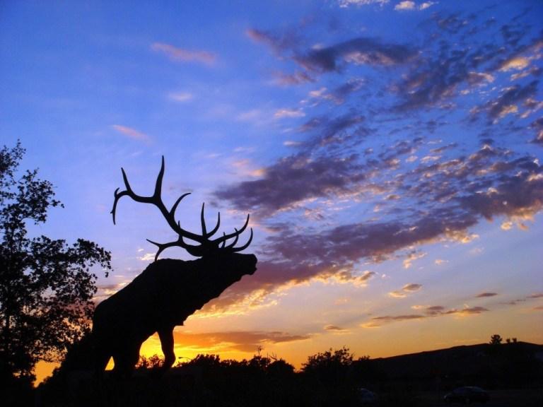 Moose -- The Hot Mess Press