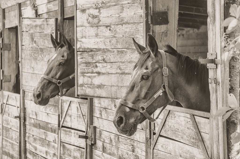Economy impact equine flu -- The Hot Mess Press