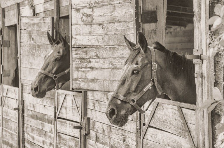 Economy impact equine flu -- The Hot Mess Press