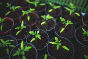 Prepare for spring: Get an early start to gardening - The Hot Mess Press
