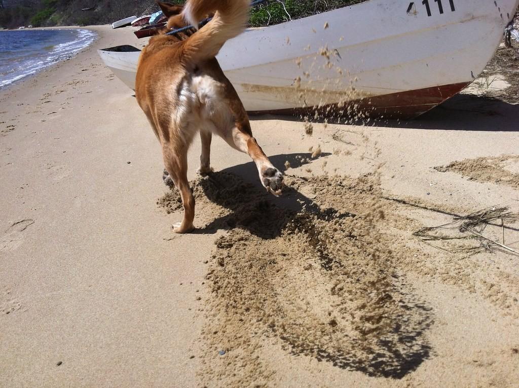 Dog kicking sand -- The Hot Mess Press