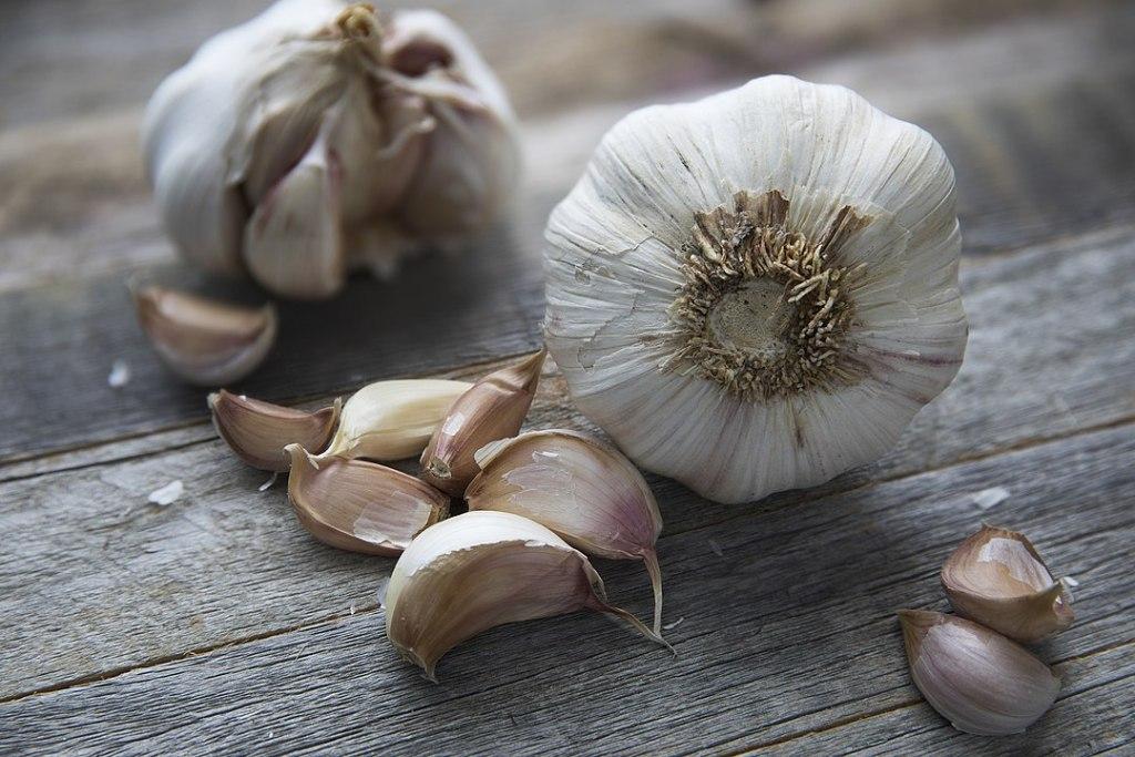 Garlic grown from scraps