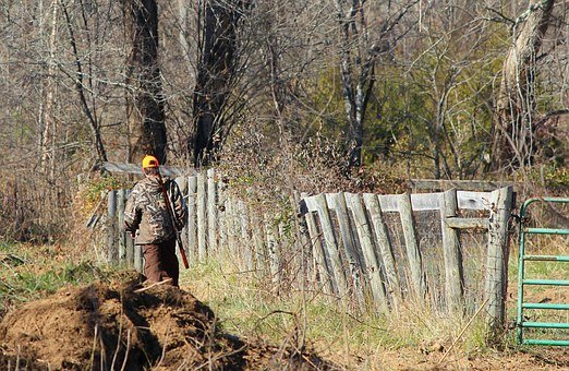 keep deer out, hunter walking along wood line