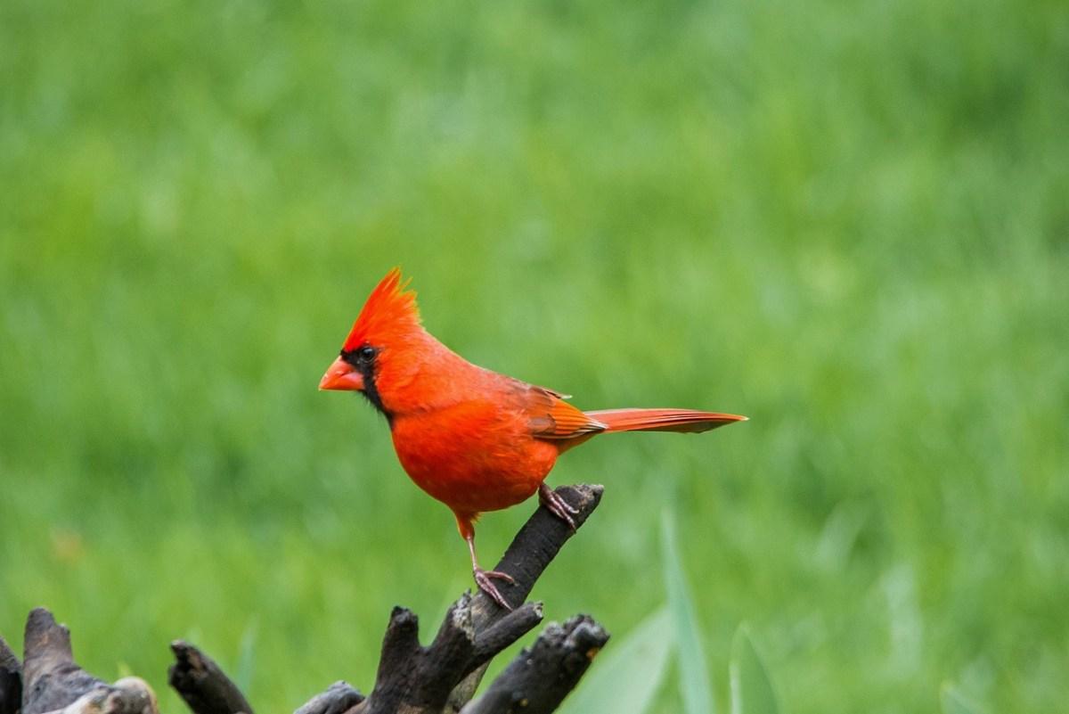 Cardinal fact about anting