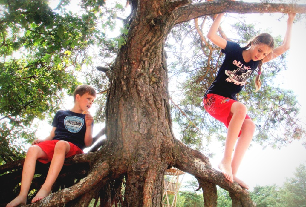 Kids play in Tree