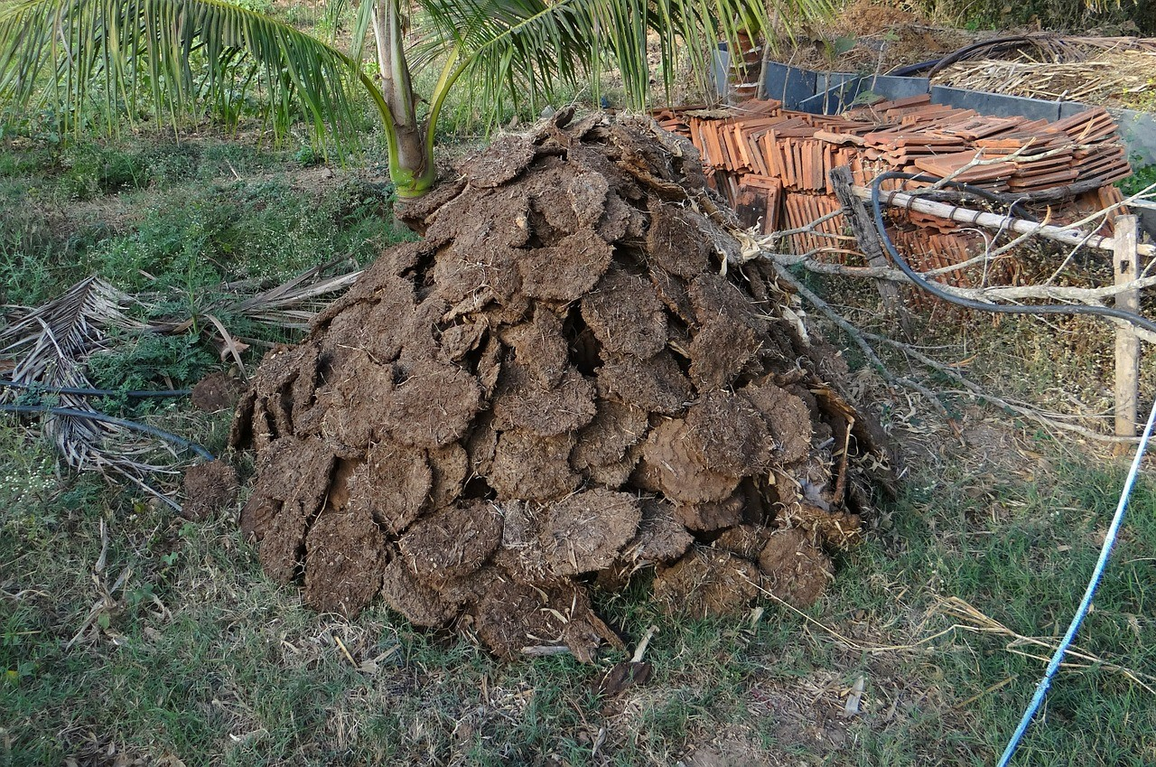 fertilizing soil, pile of cow dung