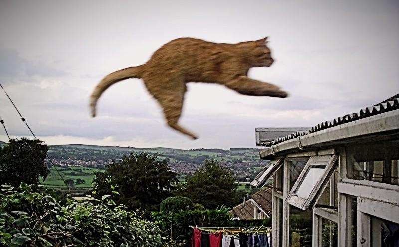 Cat Facts Cat falling