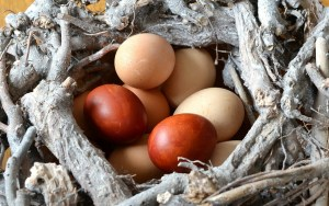 Eggs brown and white -- The Hot Mess Press