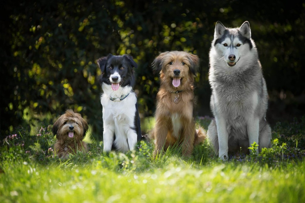 Dogs of various sizes