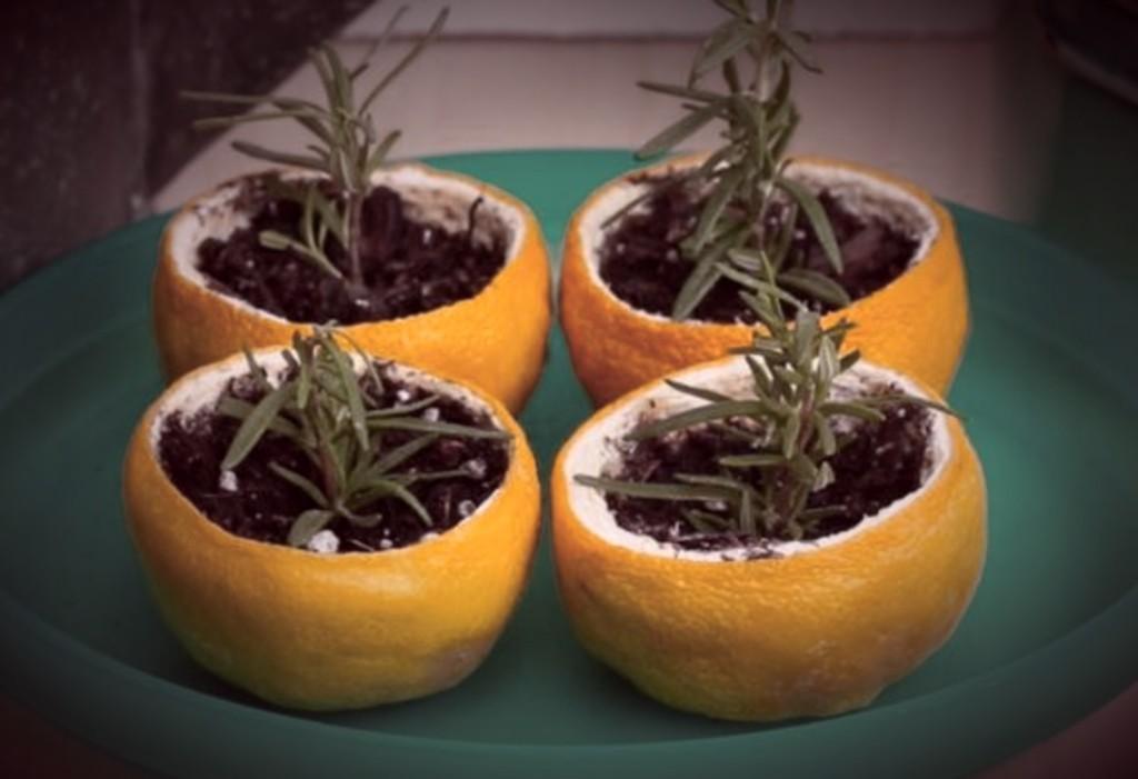 Cuttings in citrus peels