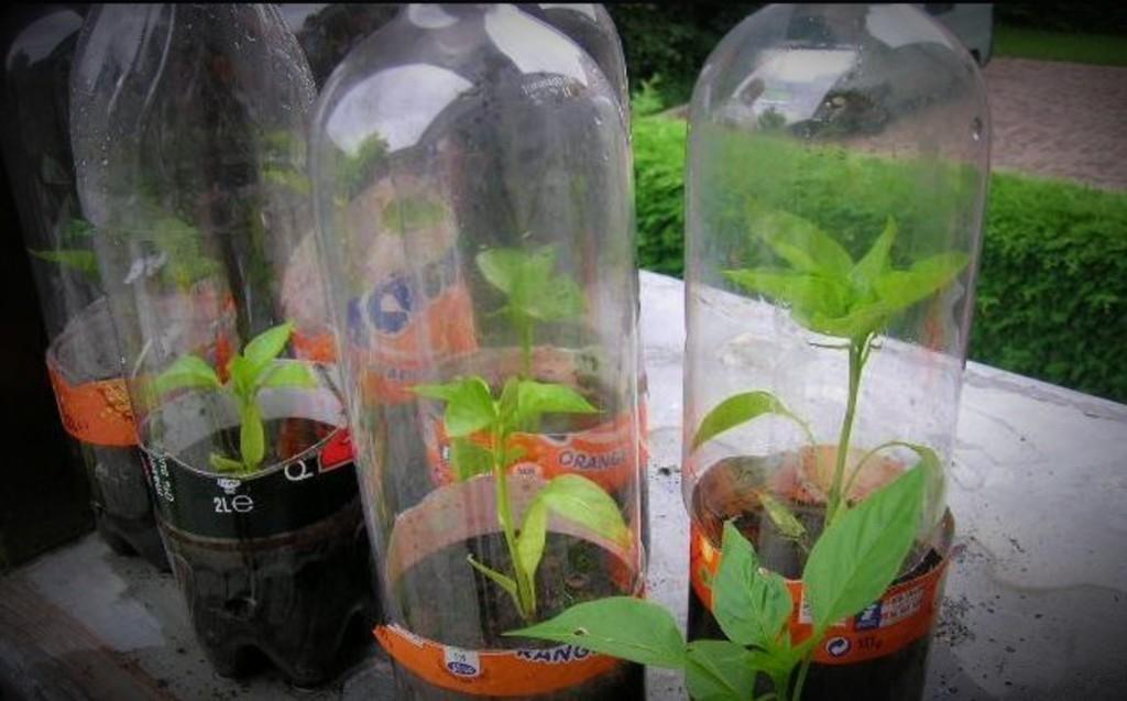 Seeds in Soda bottle