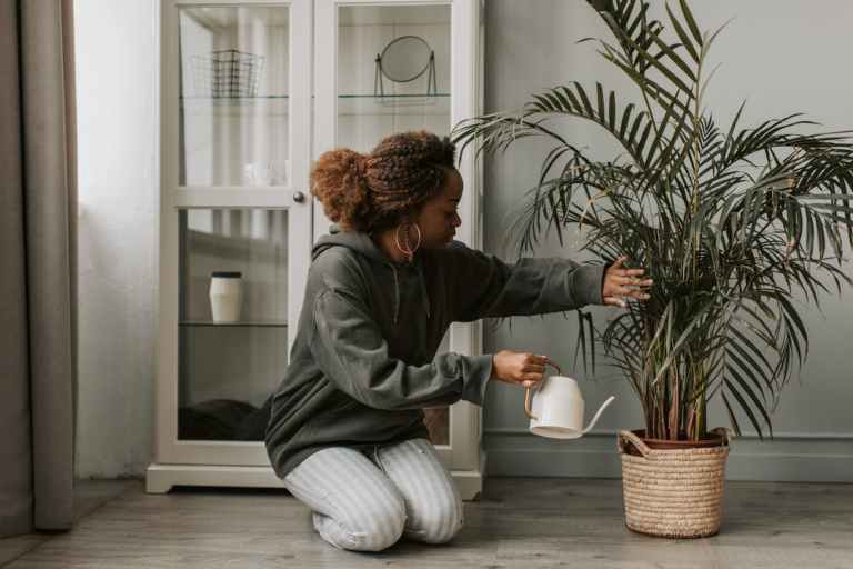 house plants, black woman kneeling, white watering can, woman watering large plant