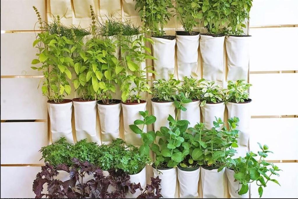 Herb Planter x 2