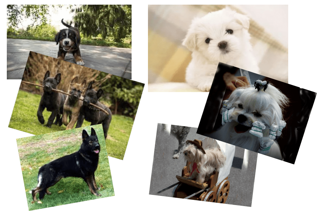 working dogs -- The Hot Mess Press