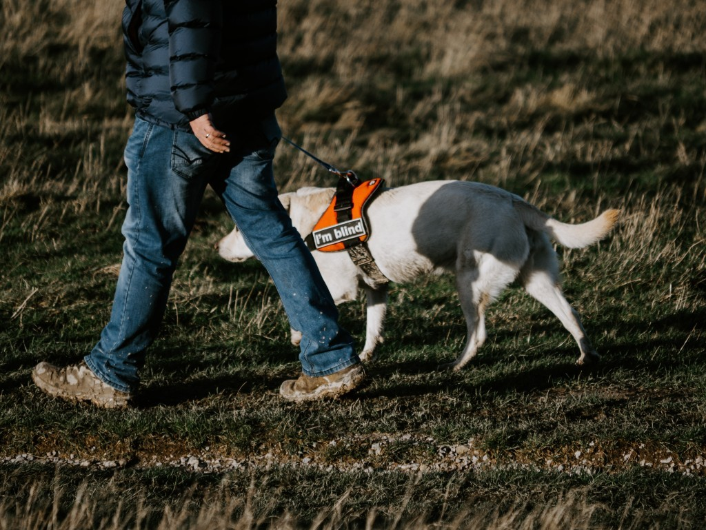 Working dogs for the blind