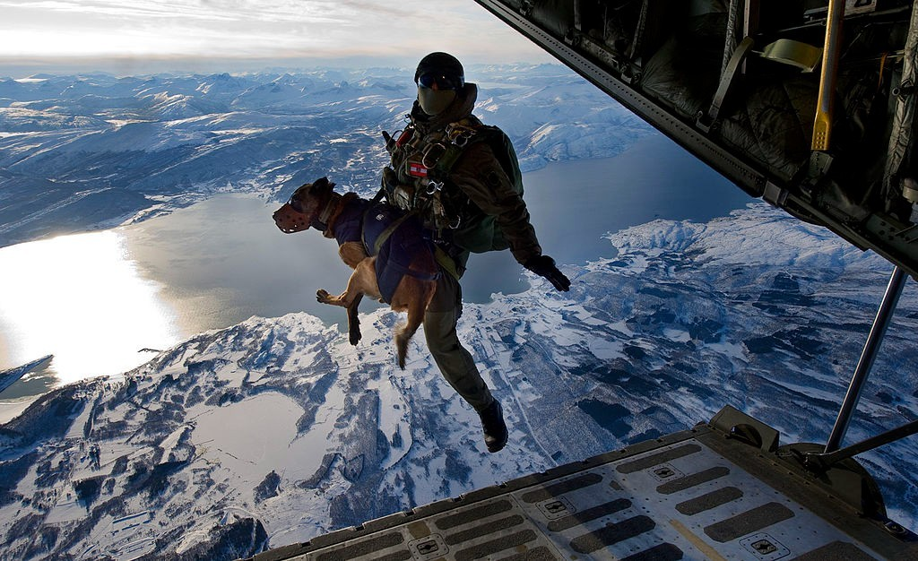 Working dog jump to rescue